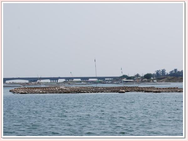 四草大橋下的蚵架.jpg
