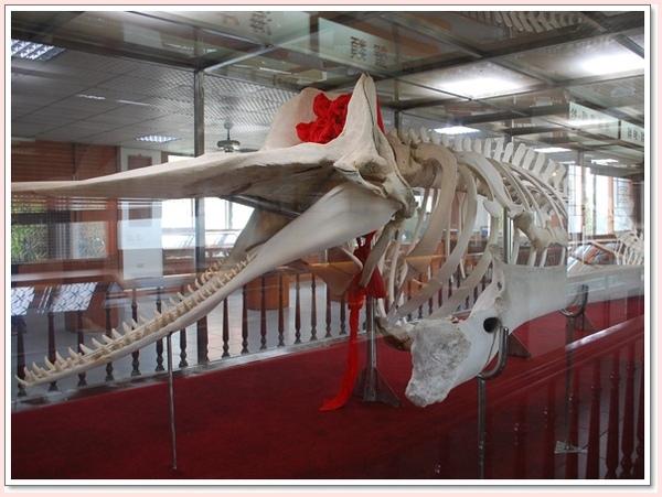 母子鯨豚.jpg