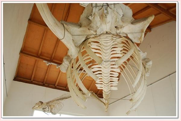 近距離看鯨豚.jpg