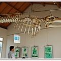 鯨豚骨頭.jpg