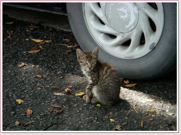 路邊的小貓.jpg