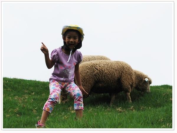 可愛的羊群.jpg