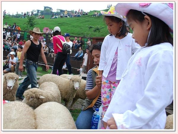 羊群就在旁邊.jpg