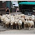 羊群衝出來囉.jpg