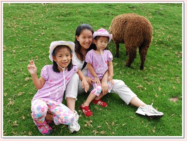 棕色的羊.jpg