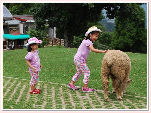 摸一摸羊吧.jpg