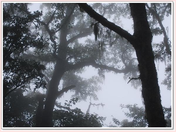長毛的樹.jpg