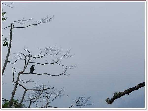 枝枒上的烏鴉