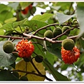 特別的果實花.jpg