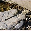 這是海蜥蜴嗎.jpg