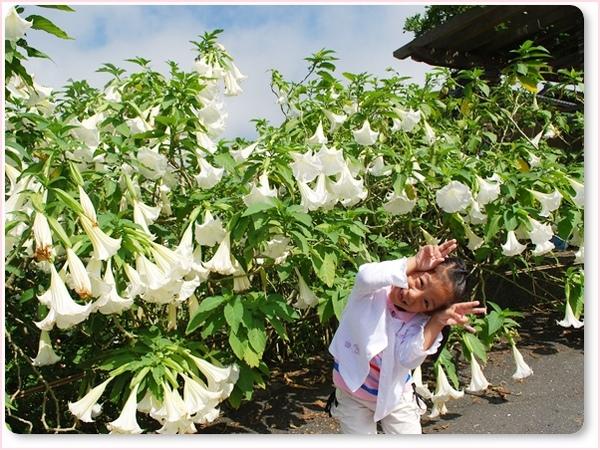 今夏最後的百合花.jpg