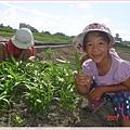 菜園(1)空心菜.jpg