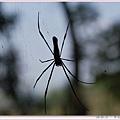 好大的蜘蛛.jpg