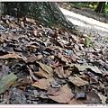 新威苗圃的落葉.jpg