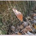 蜘蛛網.jpg