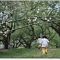 柳家梅園中奔跑的孩子.jpg