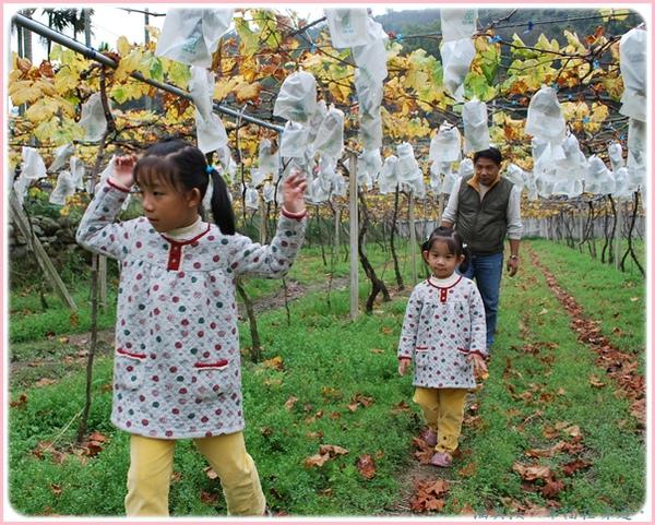 在葡萄園探險.jpg