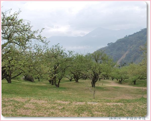 地勢平坦的柳家梅園.jpg