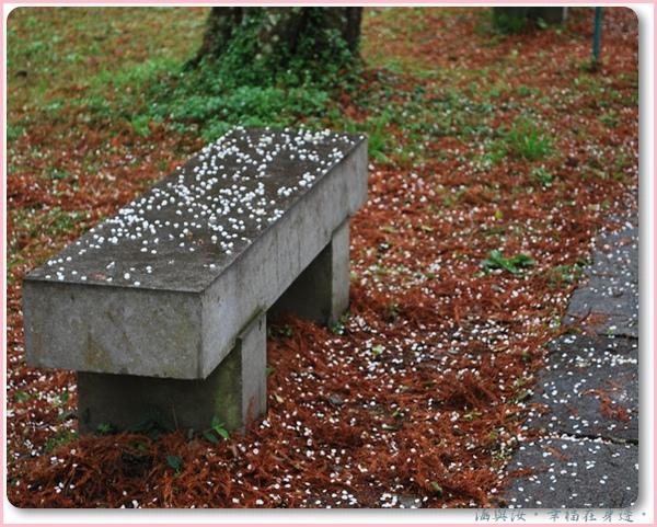 細雨中的梅花瓣.jpg