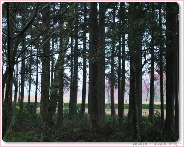 樹後的美景.jpg