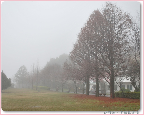 霧中的落葉松.jpg