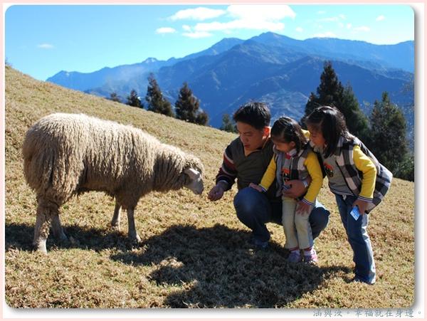 羊兒太熱情.jpg