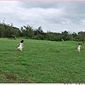 孩子在一大片草地上奔跑.jpg