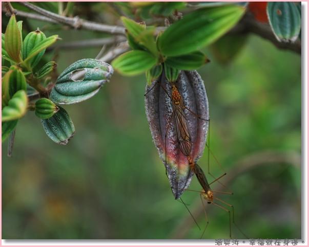 汝汝發現了交配中的昆蟲.jpg