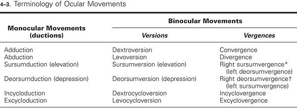 ocular movements