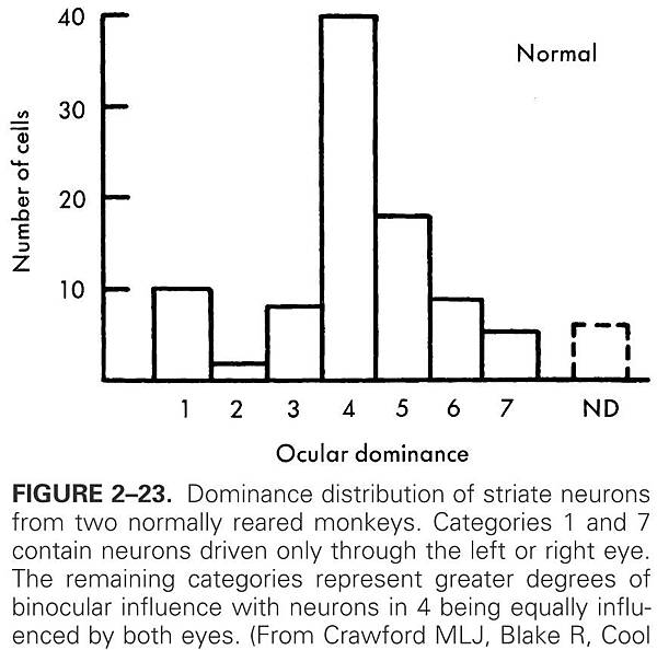 dominance distribution of striate neurons