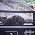 P1200528_副本.jpg