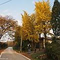 PA240071_副本.jpg