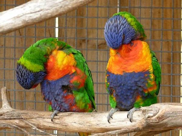 bonorong-wildlife-sanctuary.jpg