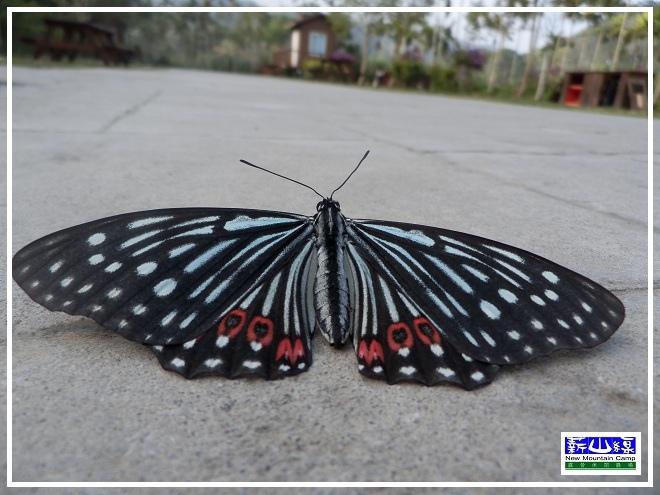蝴蝶學飛-4