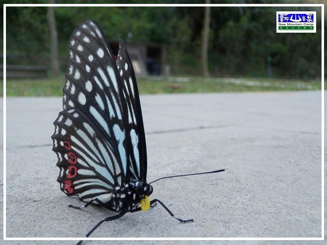 蝴蝶學飛-2