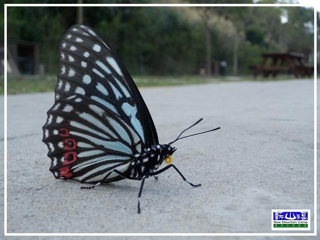 蝴蝶學飛-3