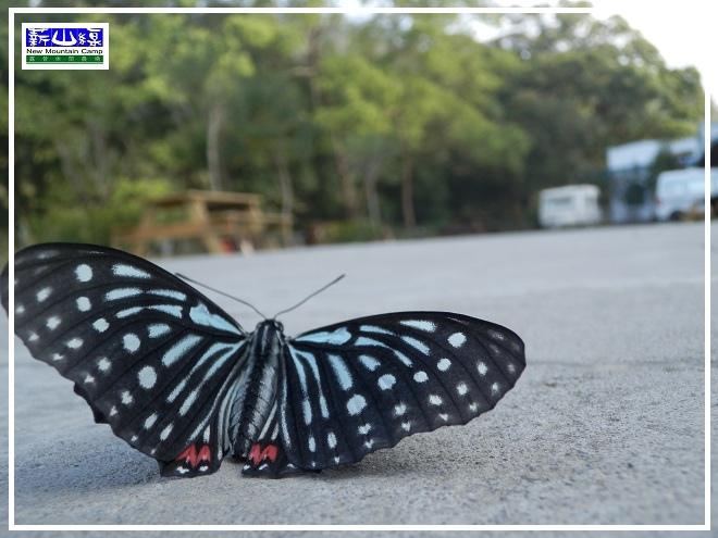 蝴蝶學飛-1