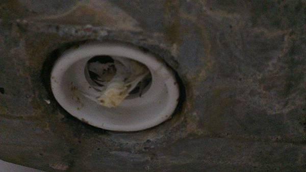 馬桶塞魚骨頭