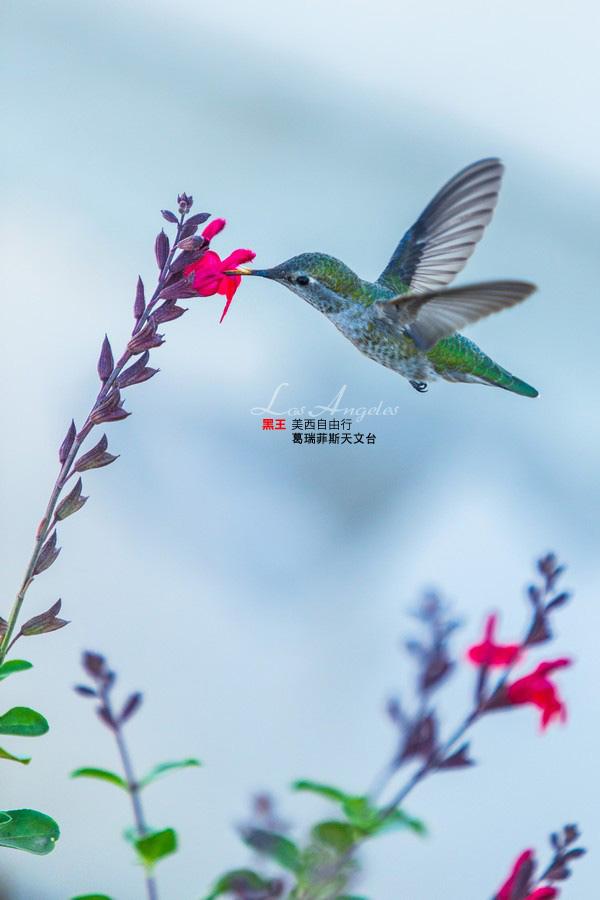 美西自由行-葛瑞菲斯天文台-14 拷貝.jpg