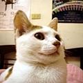 小米果3.jpg
