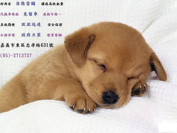 小狗_1~1