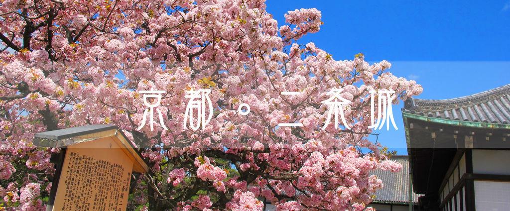 「京都二条城 櫻花」的圖片搜尋結果