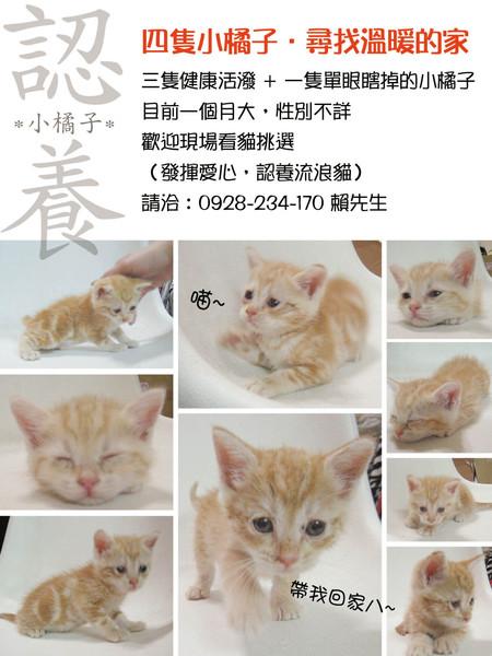四隻小小貓.jpg