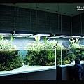 晴空塔水族館