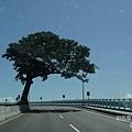 路標樹-1.JPG