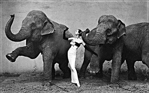 avedon_Dovina_with_Elephants2-e1358248884921.jpg