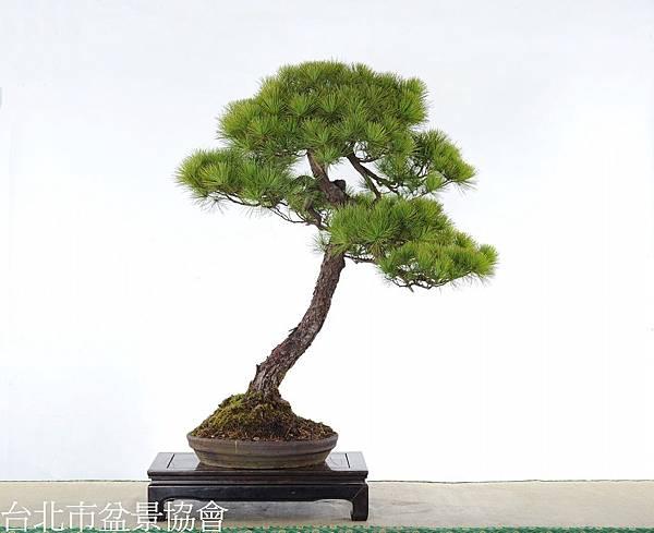 3D01-4682-五葉松-林富商.jpg