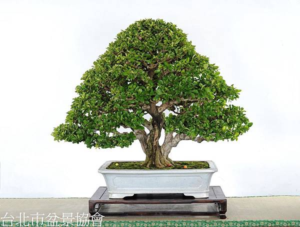3B03-4746-金樹獎-西印度櫻桃-梁悅美.jpg