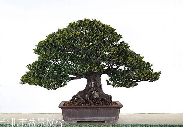 3B04-4681-金樹獎-象牙樹-許錦全.jpg