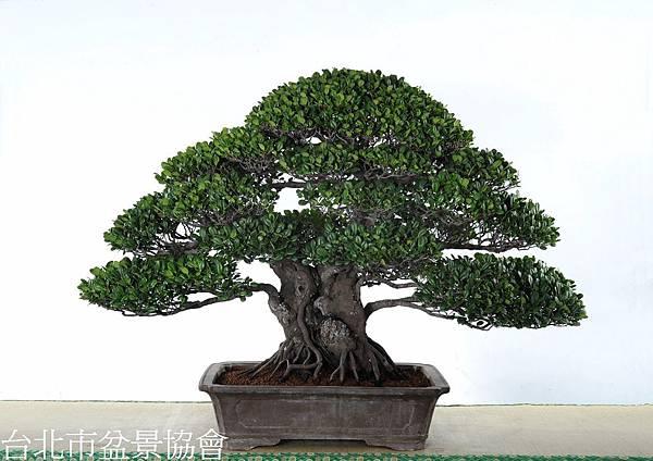 3B14-4673-銅樹獎-象牙樹-許錦全.jpg